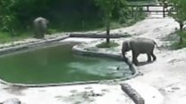 El impactante momento en que un elefante bebé es rescatado por su madre