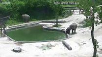 子ゾウが水に! 大人たちが協力して救出