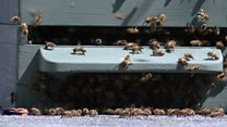 Bees swarm into town centre