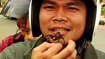 Deep fried tarantula, anyone?