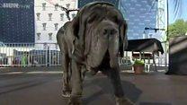 दुनिया का सबसे बदसूरत कुत्ता देखा आपने?