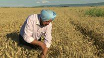 Индийцы, которые стали фермерами в Грузии