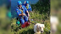 Dog survives 60ft cliff fall
