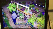 Thief walks off with a plant
