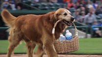 Meet baseball star Jake the dog