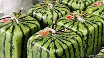 Semangka kotak di Jepang dijual Rp3 juta per buahnya