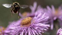 تاثیر مواد شیمیایی بر جمعیت زنبورهای عسل