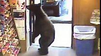 Bear walks into a liquor shop
