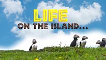 If Puffins could talk...