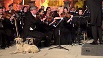 Music-loving dog upstages orchestra