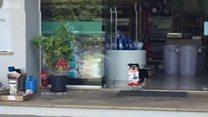 मार्केट में शॉपिंग करता कुत्ता देखा है कभी!