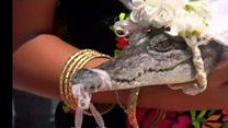 عمدة مكسيكي يتزوج تمساحا