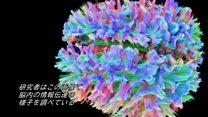 人の脳の3Dスキャン 驚くほど精緻な