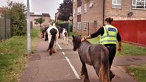 Warning as horses loose on housing estate
