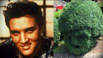 Elvis hedge