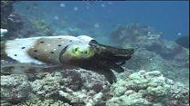 خطر از بین رفتن «دیواره مرجانی بزرگ» استرالیا
