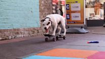 Doing dog tricks to improve breed's image