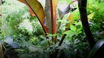 Leeds rain forest