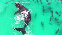 Кит грається із дельфінами