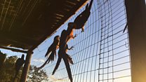 O emocionante primeiro voo de Lara, a arara que teve de aprender a viver em liberdade