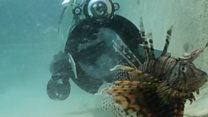 Can a robot stop this invasive predator?