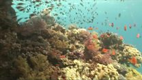 UN calls for new ocean rules