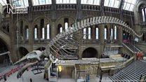 Яким буде новий головний експонат лондонського музею?