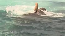Elephant found swimming 16km out to sea