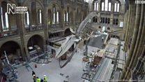 كائن جديد يحتل متحف التاريخ الطبيعي بلندن