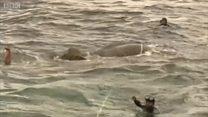 Як флот Шрі-Ланки рятував слона