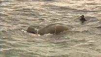 Как флот Шри-Ланки спасал слона