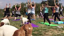 'Why we decided to do yoga with goats'