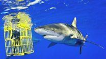 ငါးမန်းအလှ ဓာတ်ပုံဆရာ