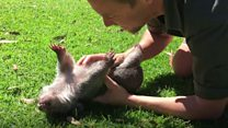 Human kindness and marsupial cuteness