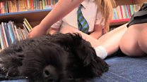 Dog helps schoolchildren with anxiety
