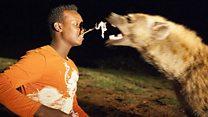 ضباع أثيوبيا الأليفة