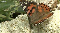 School butterflies released into wild