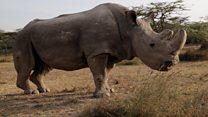 Inside radical plan to save rhinoceros