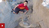 Sedang bermain bocah 10 tahun temukan fosil mastodon berusia jutaan tahun