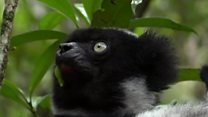 မာဒါဂတ်စကား လီမာမျောက်နဲ့ ကျောက်တူးသူများ