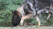 Police dog chases suspect for two miles