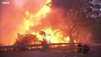 """""""Это апокалипсис!"""": жители Корсики о лесных пожарах"""