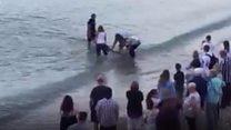 Dolphin rescue on beach