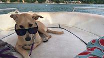 Pes-mandrivnyk podorožuje svitom