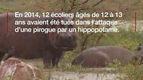 Niger: La difficile cohabitation entre les hommes et les hippopotames