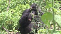 Rwanda: un tourisme plus cher