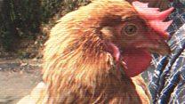 The disease-busting grandmas fighting bird flu