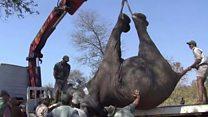 Malawi's upside-down elephants