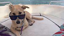 Трое в лодке: как щенок из Индии подружился с путешественниками из Украины