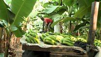 ဌက်ပျောသီးနဲ့ ဝင်ငွေရှာတဲ့ အန်ဂိုလာ